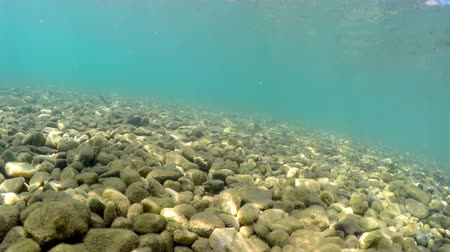 submarino : Fish pov moving on sea floor with pebbles, stones Stock Footage