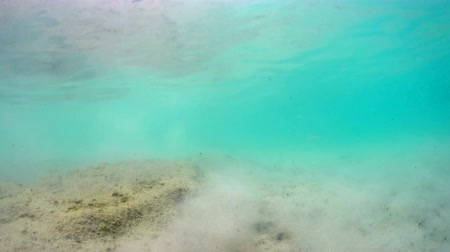 kořist : Polluted sea floor from camera floating on surface waves