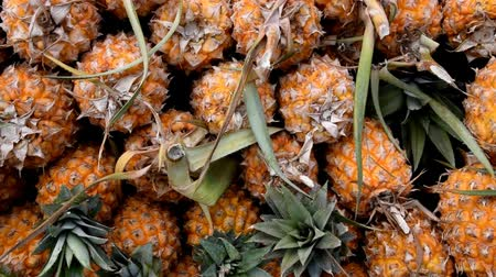 ananász : Pineapple or Ripe pineapple, Pile of Organic Pineapple at the market