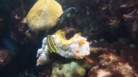 Fish and coral. Wild life animal. Wideo