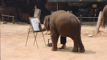 Chiang Mai Thailand - March 24, 2019: Elephant is painting by oil color at elephant camp in Chiang Mai Thailand. Wideo
