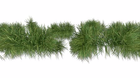 падуб : Happy New Year with pine branch on withe background Стоковые видеозаписи
