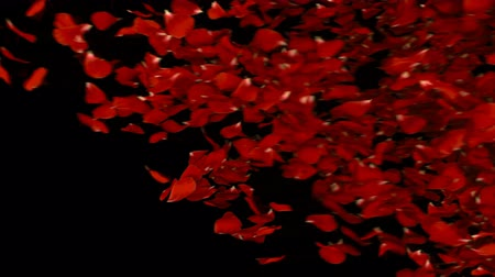 título : Transition with petals. Includes matte Stock Footage