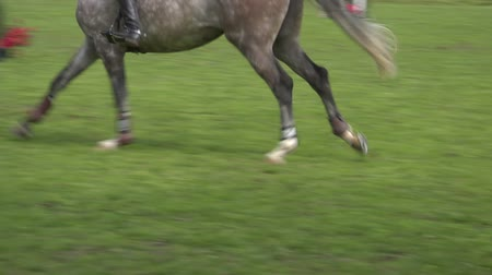 cavalinho : Close up of horse during a jump race