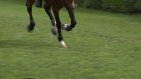 Close up of horse during a jump race