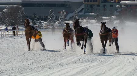 horserace : The Grand Prix of Skikjring race during White Turf in the magnificent scenery of the Upper Engadine on February 23rd, 2014 in St. Moritz Switzerland Stock Footage