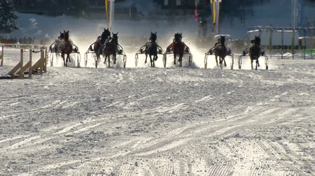 horserace : The Grand Prix of the trotters during White Turf in the magnificent scenery of the Upper Engadine on February 23rd, 2014 in St. Moritz Switzerland Stock Footage