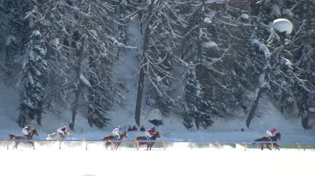 horserace : The Lady World Championship horserace on the White Turf in the magnificent scenery of the Upper Engadine on February 23rd, 2014 in St. Moritz Switzerland Stock Footage