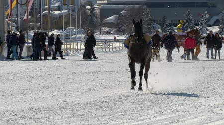 horserace : An horse galloping  without rider in slow motion at White Turf 2014 in the magnificent scenery of the Upper Engadine on February 23rd, 2014 in St. Moritz Switzerland