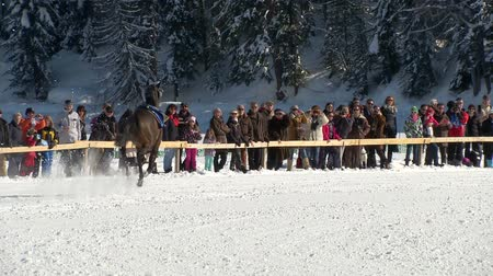 horserace : An horse without rider galloping  in slow motion at White Turf 2014 in the magnificent scenery of the Upper Engadine on February 23rd, 2014 in St. Moritz Switzerland Stock Footage