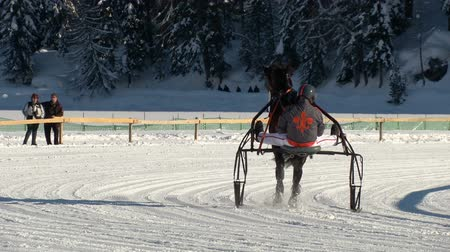 horserace : trotters and horses before White Turf Grand Prix on February 23rd, 2014 in St. Moritz Switzerland