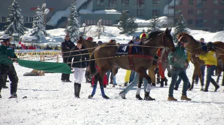 horserace : horses and skikjring before White Turf Grand Prix on February 23rd, 2014 in St. Moritz Switzerland