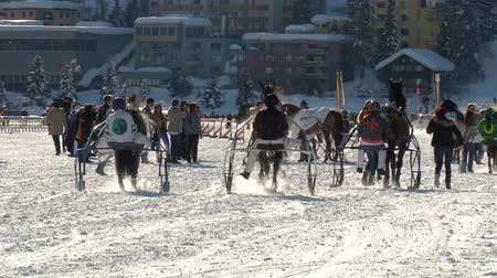 horserace : trotters and horses in slow motion after White Turf Grand Prix on February 23rd, 2014 in St. Moritz Switzerland