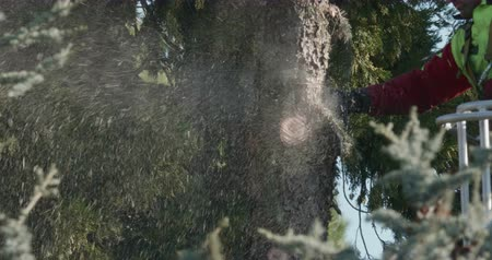 trim : Close up of a lumberjack cutting branches of a cedars with a chainsaw Stock Footage