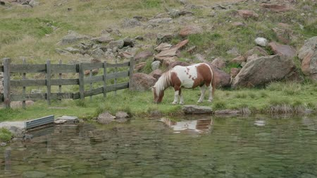 poník : A brown and white pony breading near a mountain lake