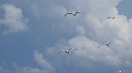 flying sea gull : Seagulls flying above the surface of the sea near the mediterranean coast Stock Footage