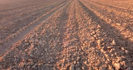 sowing : Furrows row pattern in a plowed field whit red soil