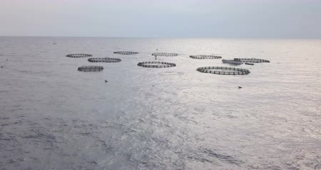 Aerial view at dawn of a fish farm of sea bream and sea bass in the Mediterranean Sea