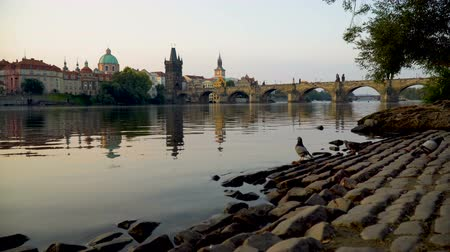 paving : Charles Bridge at sunrise Stock Footage