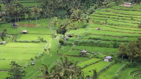 indonesia : field terraces close to mount Agung, Bali, Indonesia
