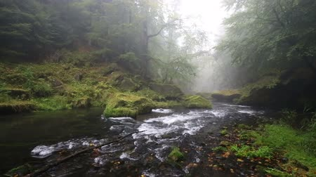 расплывчатый : river Kamenice in foggy autumn day, Bohemian Switzerland, Czech Republic Стоковые видеозаписи