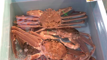 huge sale : Local alive Snow crab in water box for sale at Omicho Market, Kanazawa, Japan