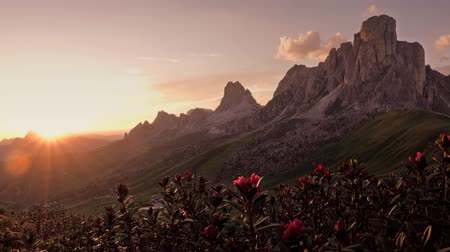 dolomiti : view of sunset in summer on Passo di Giau with mount Ra Gusela on background and rhododendrons on foreground, Colle Santa Lucia, Dolomites, Italy Stock Footage