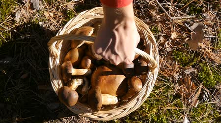 плодоношение : A hand picks up a basket of mushrooms. View from above. Стоковые видеозаписи