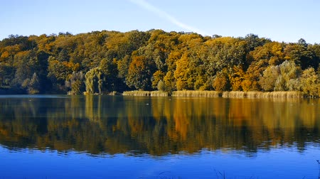 гребля : Panorama of a large beautiful autumn landscape with a lake and trees. Стоковые видеозаписи