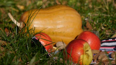 sklizené : Female hand picks up an apple. Close-up. Pumpkin in the background.