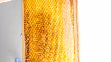 Hand using a knife to clog honeycombs with honey in a frame Stock Footage