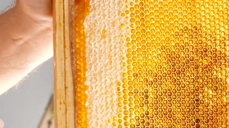 Hand using a knife to clog honeycomb with honey in a frame in the sun