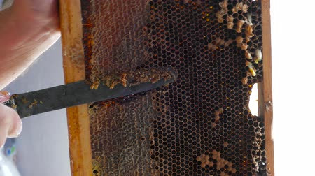 the disclosure of honeycomb honeycomb in the frame of dark wax with a knife on the frame Stock Footage