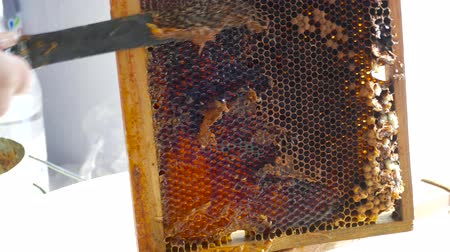 açucarado : Cells filled with flowing honey. the process of opening honeycombs with honey from wax with a knife.