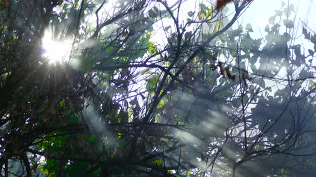 rays of the sun make their way through the branches of a tree in black smoke