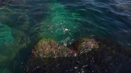 midye : Stone and water plants in the sea Stok Video