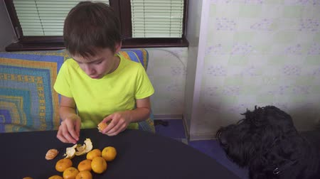tangerina : Boy helping his mother to prepare tangerines for cake at home kitchen