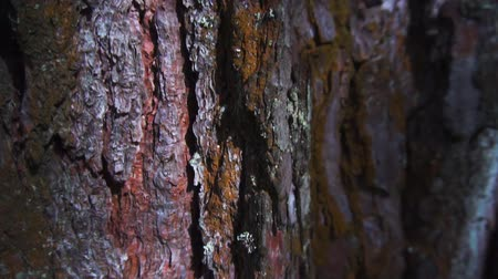 Tree bark, woody background close-up