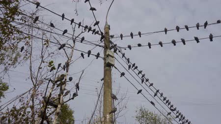 Birds sitting on power lines in the city at daytime