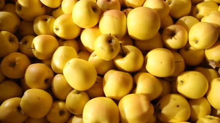 desszertek : large amount yellow apples Stock mozgókép