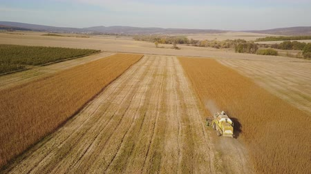 soja : combine harvester collects soybean