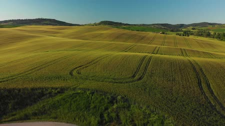 toskánský : Aerial footage, green hills and gorgeous vineyards on sunset in Tuscany, Italy. Landscape by drone. Dostupné videozáznamy
