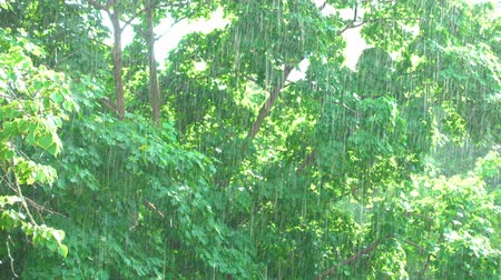 meteorological : Sunshower - Trees and rain during sunshine, 4K UHD nature-related footage