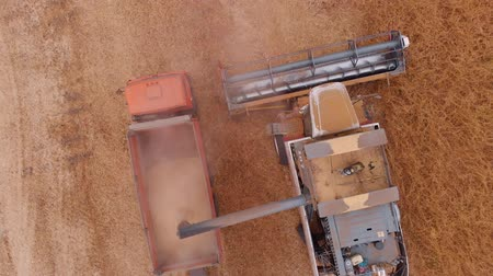 farm in brazil : Harvesting of soybean field with combine Stock Footage