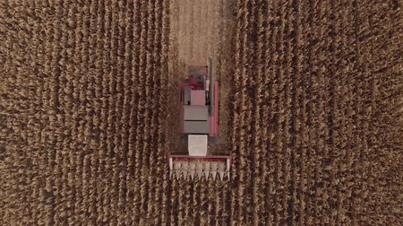 mezőgazdasági : Harvesting Corn in Fall skyline Aerial, Shooting from air