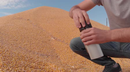 tiller : Determination of moisture content of grain yield in field conditions Corn Stock Footage