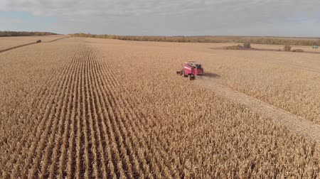 rural brazil : Harvesting corn in autumn Aerial top view.Shooting from air