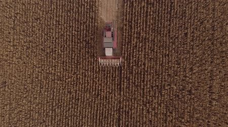 cereais : Harvesting Corn in Fall skyline Aerial, Shooting from air