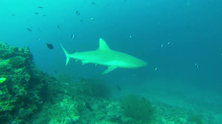requins : piscine requin