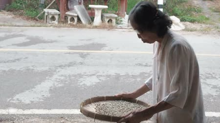 шелуха : Chiang Mai province, Thailand - May 23, 2019: Positive smiling elderly woman throws up and sorting through arabica coffee beans on small round wicker basket or bamboo sieve, make quality control and selection on coffee plantation factory of Southeast Asia Стоковые видеозаписи
